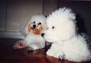 our beloved top dogs Margot and Georgie who just recently passed away after 14 years of making us happy.